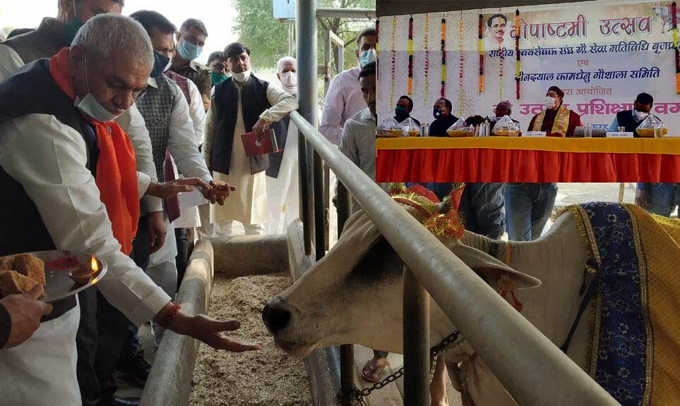 मथुरा : आरएसएस द्वारा आयोजित गोपाष्टमी उत्सव में पहुंचे केबिनेट मंत्री, गायों को खिलाया गुड़