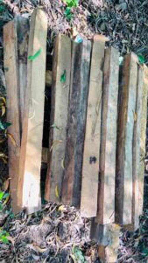 वन विभाग की छापेमारी में 1.637 घनमीटर फर्नीचर एवं चिरान जब्त