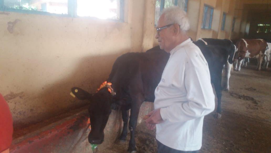 ऋषिकेश में गोपाष्टमी पर गायों की पूजा
