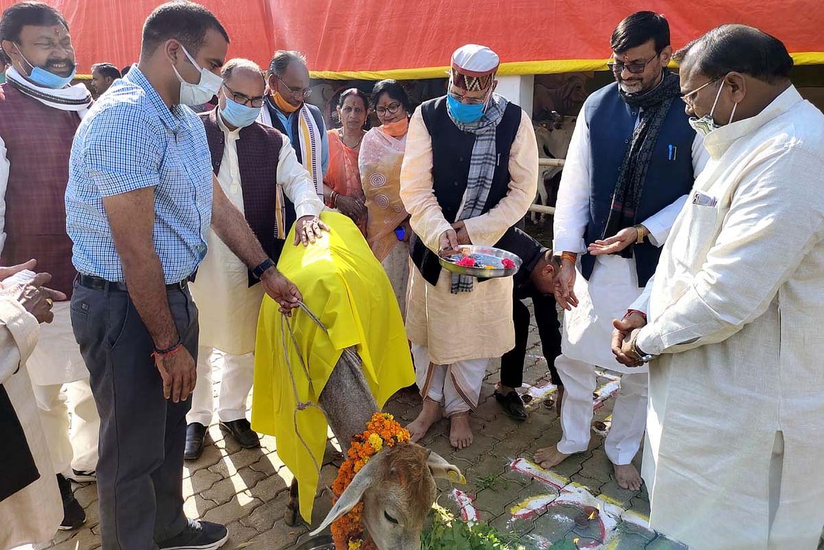 धर्म नगरी में धूमधाम से मनाई गई गोपाष्टमी पर्व, मंत्री-सांसद और डीएम ने चना-गुड़ खिलाकर किया गौ पूजन