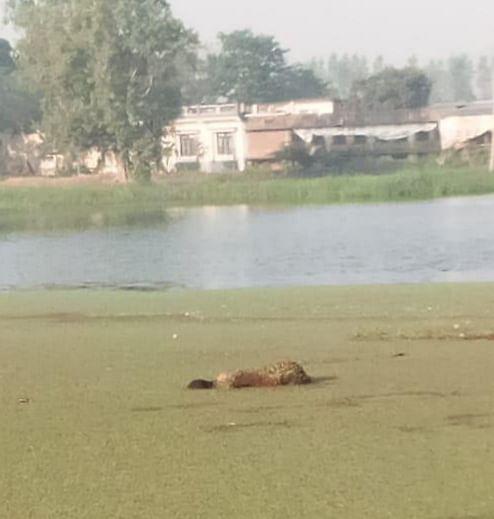 शादीशुदा युवती की तालाब में शव मिलने से सनसनी