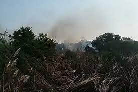 बुद्धा पार्क में लगी आग से चपेट में आया विश्वविद्यालय का जंगल, मचा हड़कम्प