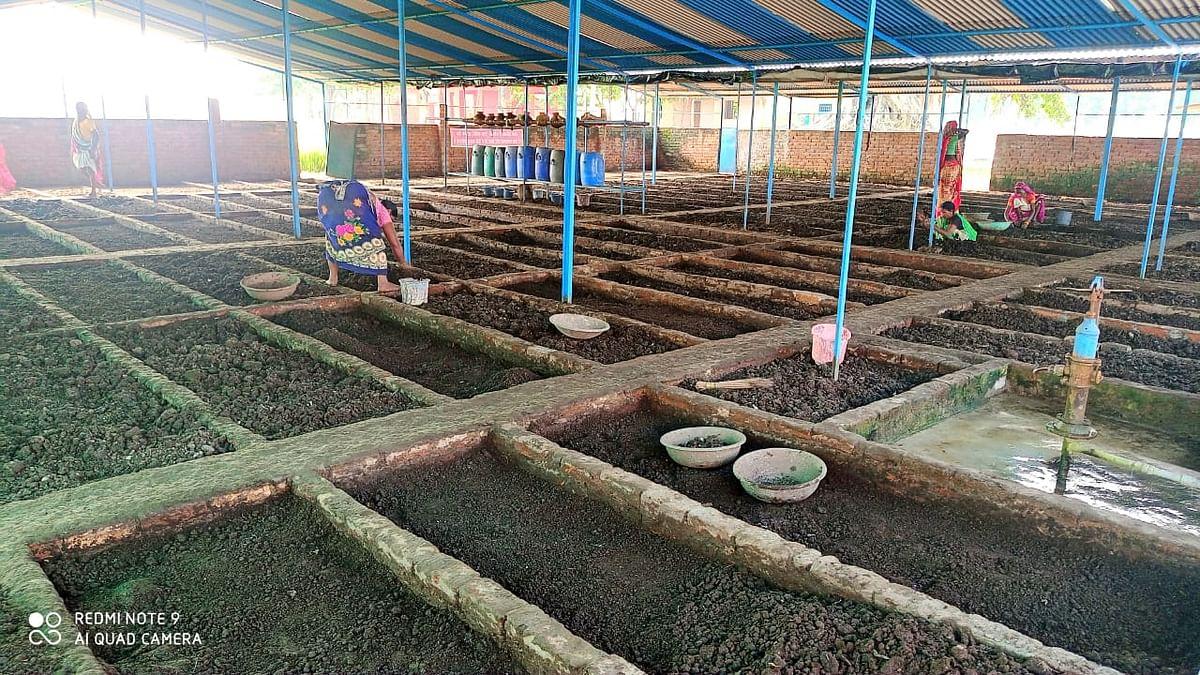 जैविक खेती को बढ़ावा : चालीस केंचुओं से शुरू कर बनाईं 35 से अधिक वर्मी कम्पोस्ट उत्पादन इकाई