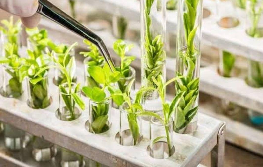 प्रदेश के पहले वन विज्ञान केंद्र से नई कृषि तकनीकों को मिलेगा बढ़ावा