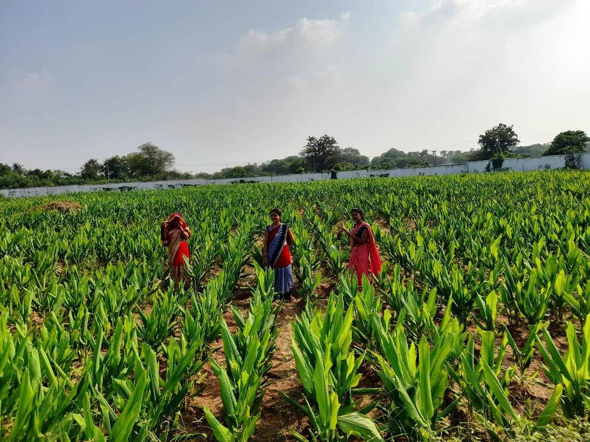 धमतरी : अनुपयोगी जमीन में ली सब्जी की पैदावार, तीन माह में हुआ सवा लाख का मुनाफा
