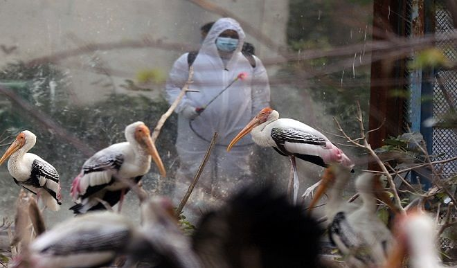 Bird flu caused panic in Delhi! Four parks including Sanjay Lake, Hastasal closed