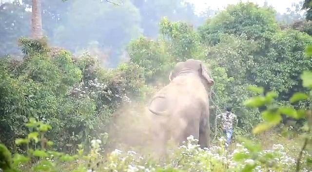 Pet elephant killed and killed Mahavat