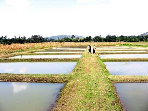 कृषि प्रशिक्षण के दौरान किसानों  को मत्स्य पालन और आधुनिक खेती अपनाने  पर दिया गया बल