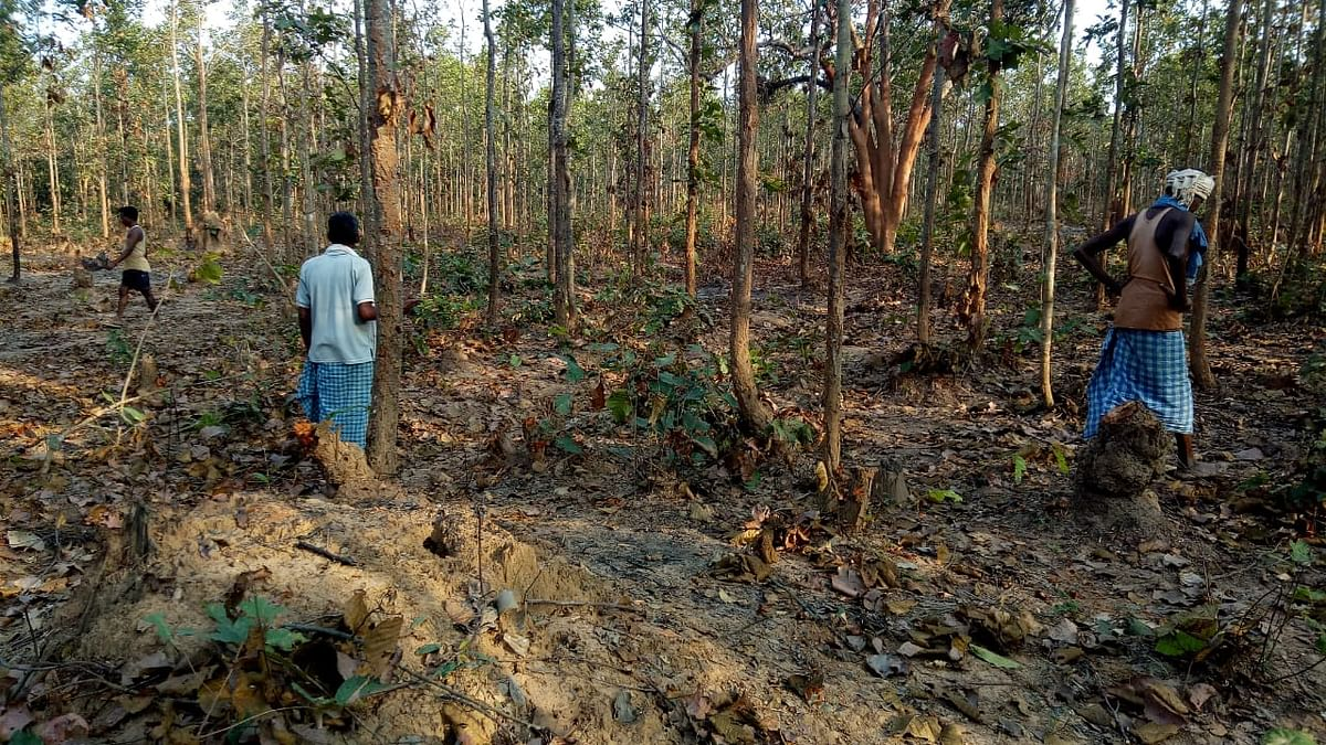 Kondagaon: Thousands of lush green trees cut down in a dispute between two villages