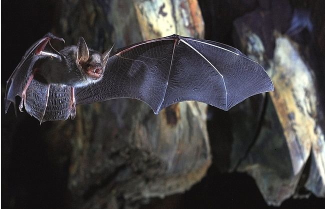 China's negligence has hit the world heavily Scientists obeyed the bite of bats