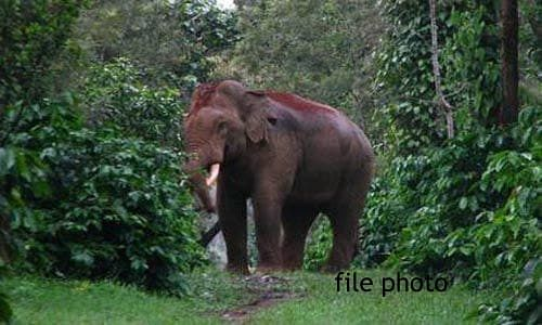Raigad: a group of 18 elephants camped in the forest of Junwani