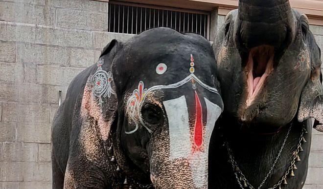 Uttarakhand High Court prohibits withdrawal of notification of Shivalik Elephant Sanctuary