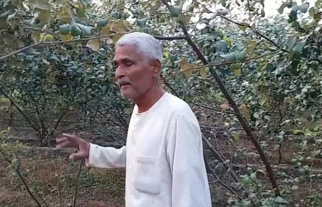 'Apple berry' giving new profits to farmers, giving good profits at low cost