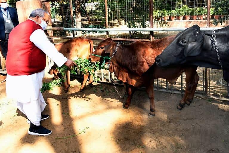 मकर संक्रांति : राज्यपाल ने शिव मंदिर में की पूजा-अर्चना, गाय को खिलाया गुड़ और चारा
