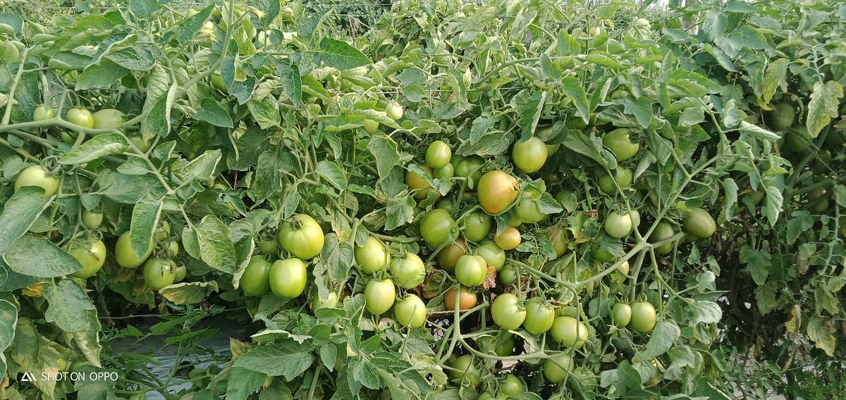 जहरमुक्त भोजन के लिए पीएम के ऑर्गेनिक खेती की अपील का दिखने लगा है असर