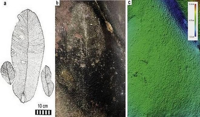 भीमबेटका में मिले करोड़ों साल पुराने डिकिंसोनिया जीवाश्म