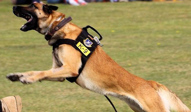 अब प्रमोशन के लिए पुलिस डॉग को देना होगा K9 टेस्ट, जानिए इसके बारे में