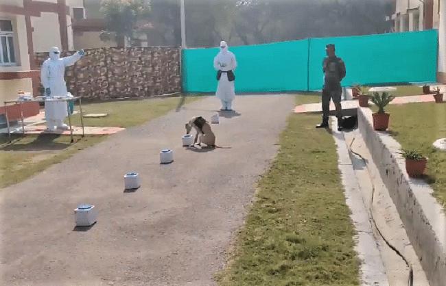 कोरोना पॉजिटिव सैम्पलपहचानने में कामयाब रहे सेना के खोजी कुत्ते