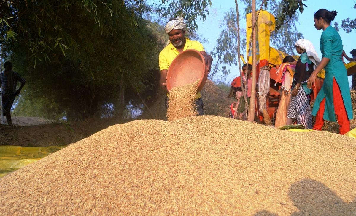 रायपुर- उपार्जन केन्द्रों से अब तक 55 लाख मीट्रिक टन धान का उठाव