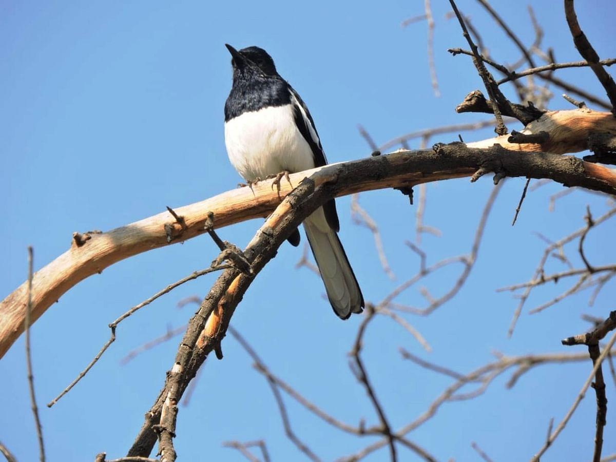 उदयपुर, बांसवाड़ा, सागवाड़ा, डूंगरपुर, चित्तौड़गढ़ व अजमेर में हुई पक्षी गणना