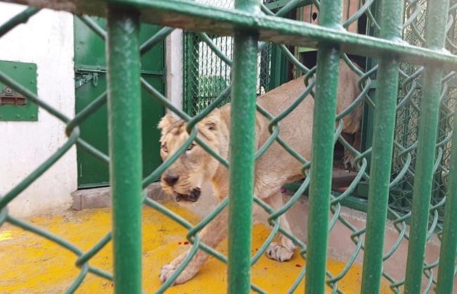 गोरखपुर : शहीद अशफाक उल्लाह खान ज़ू को मिले दो 'वनराज'