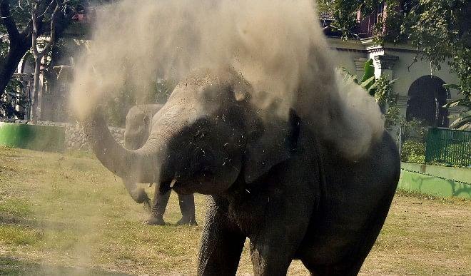 मध्यप्रदेश-जंगल-से-बाहर-निकलकर-जंगली-हाथियों-ने-तीन-लोगों-को-कुचला-सभी-की-मौत