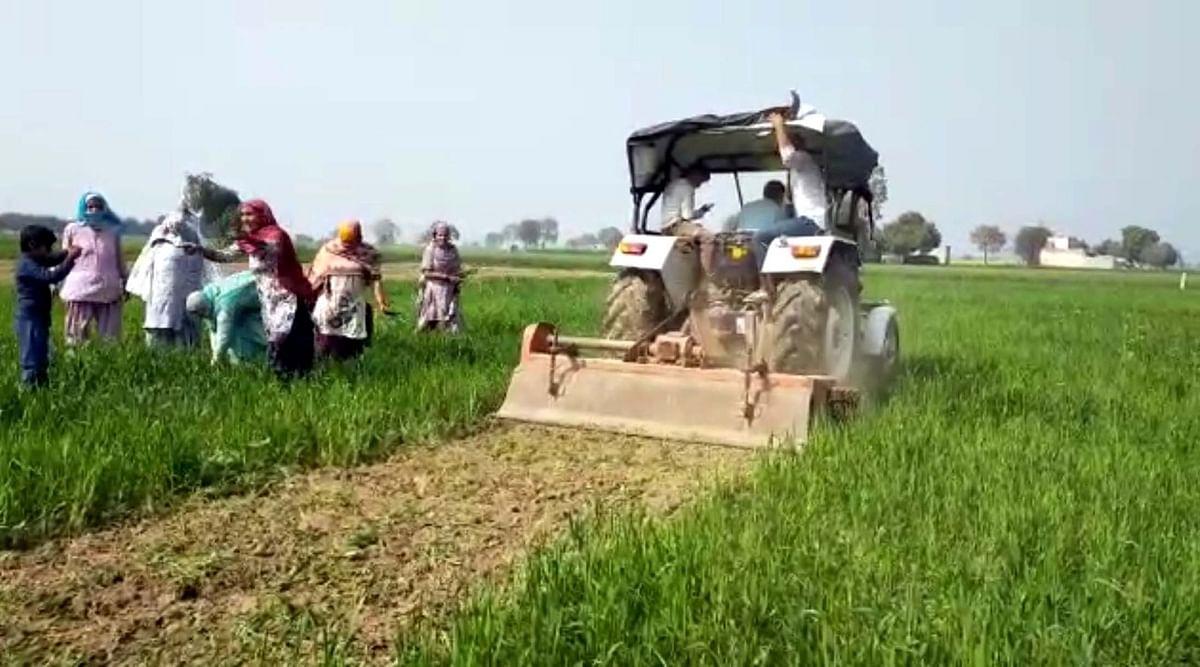 जींद में कृषि कानूनों का विरोध, किसान ने नष्ट की फसल