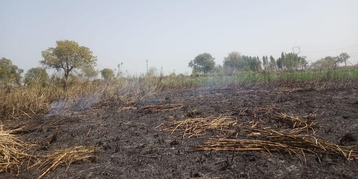 संदिग्ध परिस्थितियों में गन्ने के खेत में लगी आग, एक एकड़ फसल जलकर नष्ट