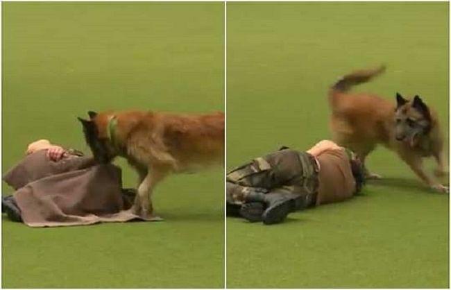 अब यूरिन और पसीने को सूंघकर कोरोना मरीजों को पहचान लेंगे सेना के कुत्ते