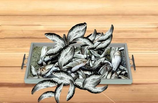 कुशीनगर : 'चेपुआ मछली' के रहन-सहन का परीक्षण शुरू, खुलेगा 'रोजगार-संरक्षण' का द्वार