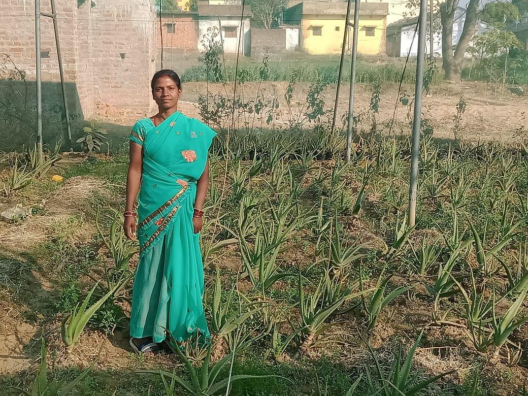 झारखंड : हर आंगन और खेत में एलोवेरा की खेती, महिलाएं सहेज रहीं पौधे
