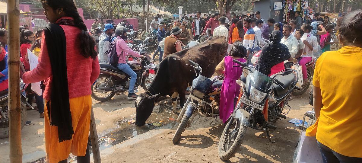 आरा के रमना मैदान में आवारा पशुओं से छात्र छात्राएं परेशान,महावीर मन्दिर स्थल पर चोटिल हो रहे विद्यार्थी