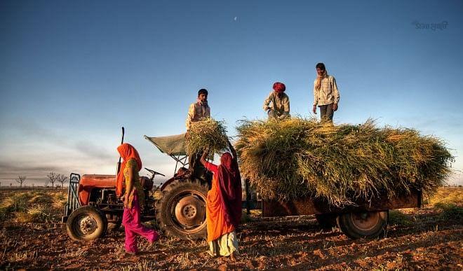 दूसरे राज्यों का 3900 टन से अधिक पीडीएस का गेहूं महाराष्ट्र के अलीबाग में जब्त