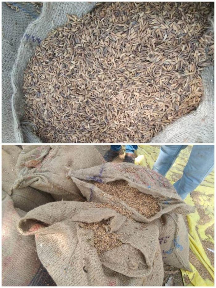 बीजापुर : धान खरीदी की समय सीमा के बाद दो सौ बोरे सड़े- खराब धान लिया गया : मुदलियार