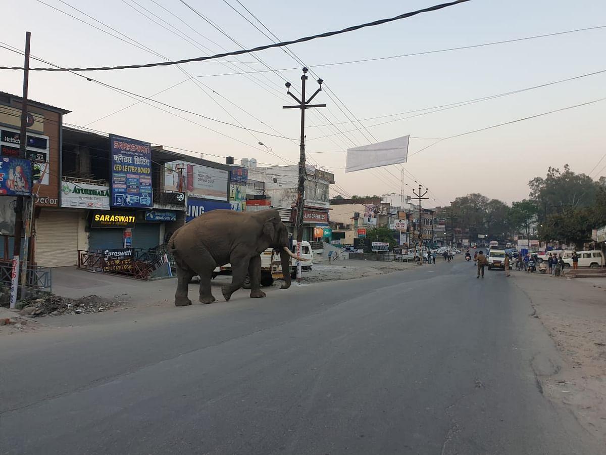 विधानसभा अध्यक्ष के आवास पहुंचा हाथी