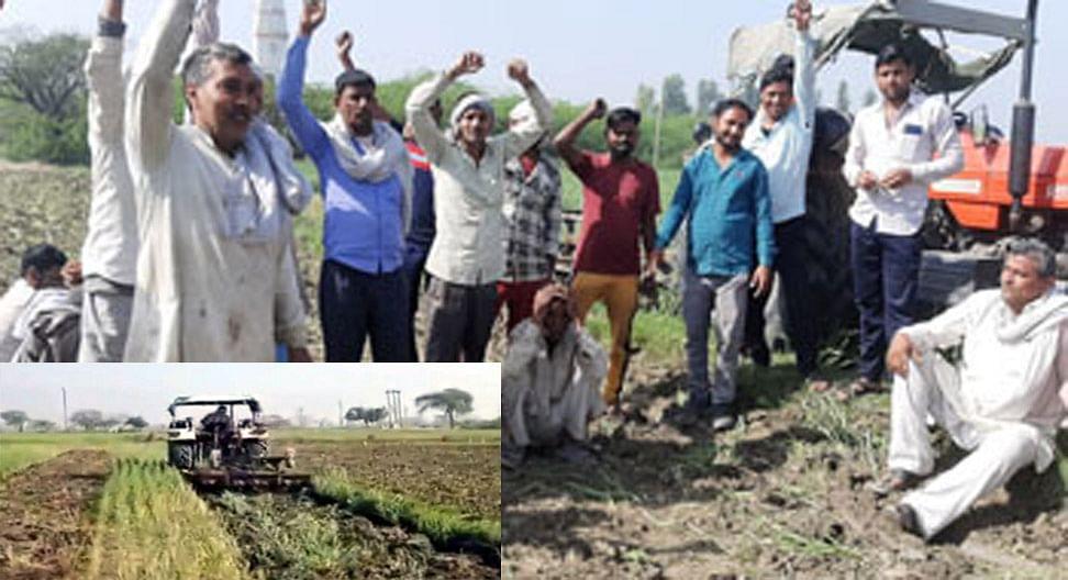 मथुरा : कृषि काले कानून को लेकर किसानों ने तैयार गेहूं की फसल जोतकर की बर्बाद