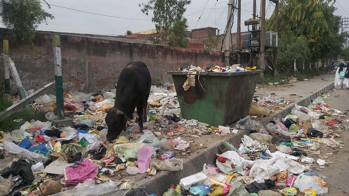 सफाई कर्मचारी युनियन की हड़ताल जारी, शहर में सफाई व्यस्था चरमराई, बिमारी फैलने का खतरा मंडराने लगा