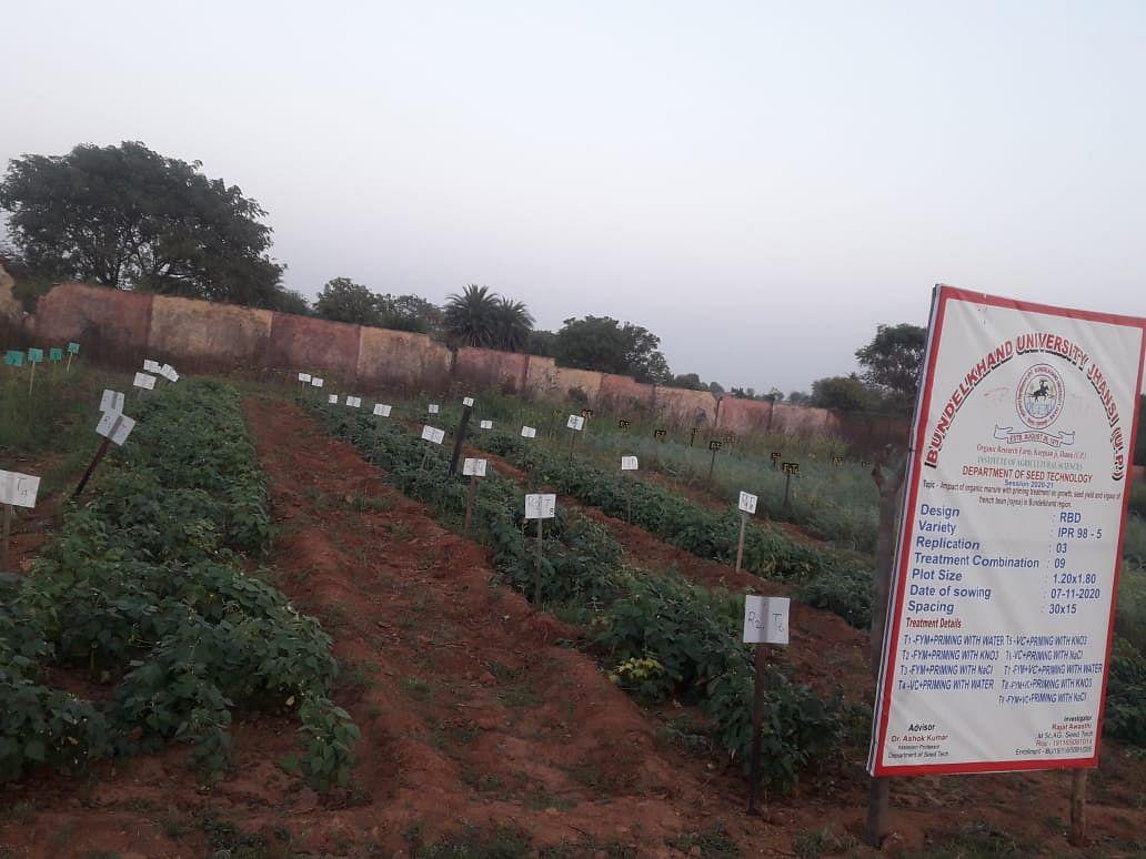 बुंदेलखंड के किसानों के लिए लाभदायक सिद्ध हो सकता है लाल राजमा का उत्पादन