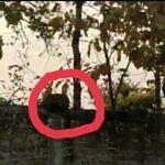 कोरबा : दीपका क्षेत्र में तेंदुआ का आतंक ग्रामीण पर किया हमला
