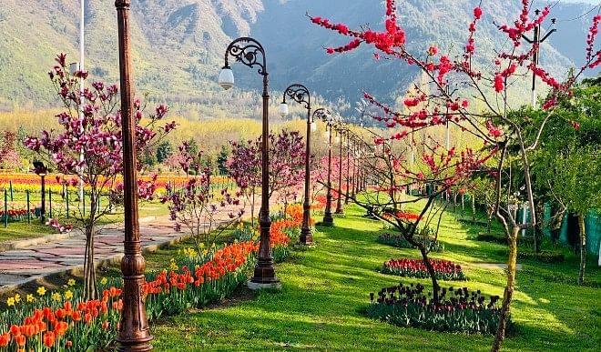 कश्मीर का ट्यूलिप गार्डन 25 मार्च से पर्यटकों के लिए खुल जाएगा