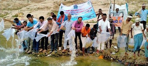 सिफरी ने गंगा नदी में छोड़े बीस हजार मत्स्य बीज