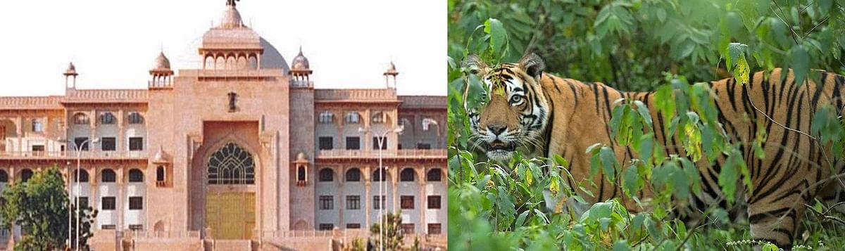 राजस्थान में पांच वर्षों में जंगली जानवरों के हमले में 34 की मौत, 155 घायल