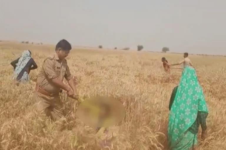 मथुरा: बिना अनुमति गेहूं की फसल काटने पर पुलिस ने महिला और बच्चियों को पीटा, वायरल