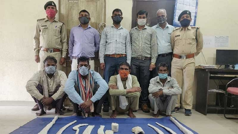 four-accused-of-leopard-hunting-arrested