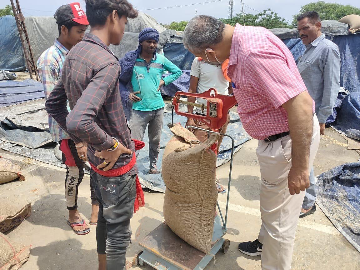 मोगा जिले (पंजाब) की मंडियों में गेहूं खरीद प्रक्रिया की निगरानी 107 पर्यवेक्षकों के जिम्मे।