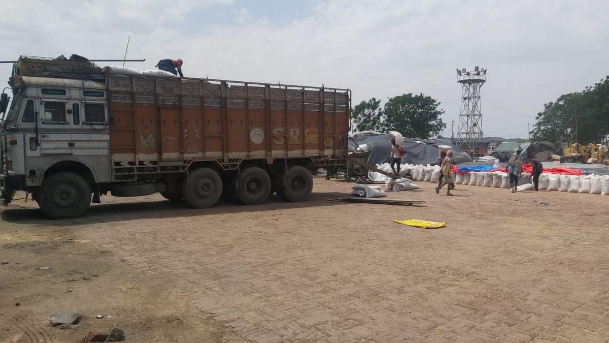 पंजाब की जिला मंडियों में गेहूं की बिना किसी रुकावट के बम्पर खरीद हो रही है।