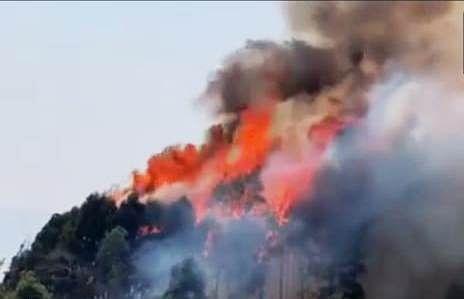 दक्षिण सिक्किम के नागी जंगल में भीषण आगजनी