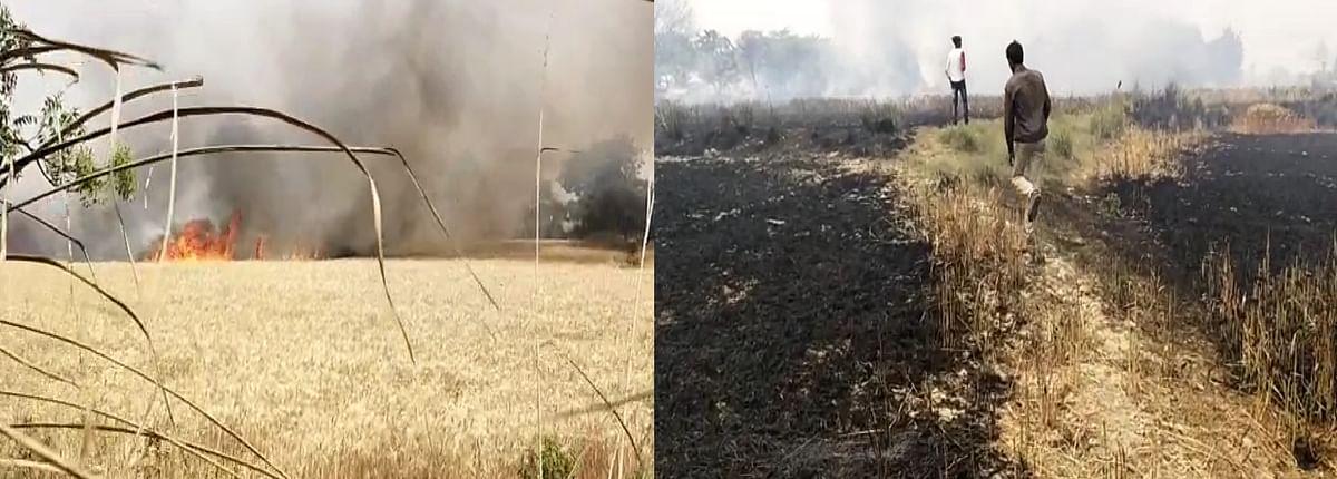 wheat-crop-caught-fire-30-bigha-cultivation-burnt