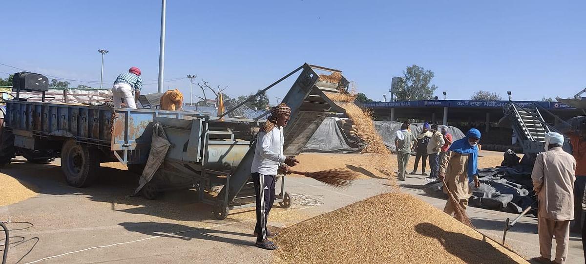 जिला होशियारपुर में फसल कटाई  के समय में हुआ बदलाव, अब सुबह 9 बजे से सांय 7 बजे तक किसान कर सकेंगे गेहूं की कटाई