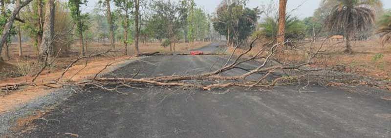 नारायणपुर : नक्सलियों ने पेड़ काटकर नारायणपुर-ओरछा मुख्य मार्ग किया अवरुद्ध